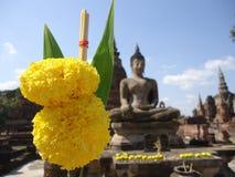 Flor do Marigold Foto de Stock Royalty Free