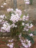 Flor do meu jardim Royalty Free Stock Photo