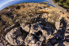 Flor do monte de Grécia Fotografia de Stock