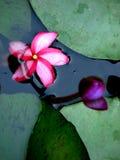 Flor do n do botão Foto de Stock Royalty Free