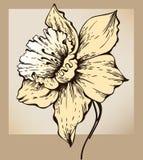 Flor do narciso ilustração stock
