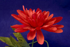 Flor do Natal Foto de Stock Royalty Free