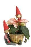 Flor do Natal dos Poinsettias Fotografia de Stock Royalty Free