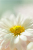 Flor 3 do outono Fotos de Stock Royalty Free