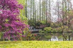 A flor do pêssego da beira do lago Fotos de Stock