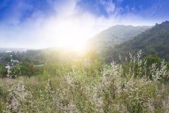 Flor do parque da grama e da montanha Imagens de Stock
