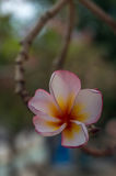 Flor do parque de Chatuchak Fotos de Stock Royalty Free