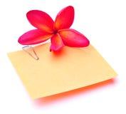 Flor do Plumeria e vara em branco do memorando Imagem de Stock