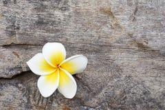 Flor do Plumeria na madeira velha do grunge Fotos de Stock