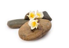 A flor do Plumeria na pedra para termas relaxa Fotografia de Stock Royalty Free