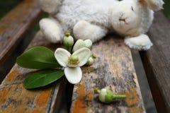 Flor do pomelo com um coelho do brinquedo do sono na cadeira de madeira Imagens de Stock Royalty Free