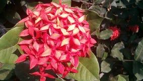 Flor do ponto Imagens de Stock Royalty Free