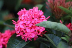 Flor do ponto Imagem de Stock