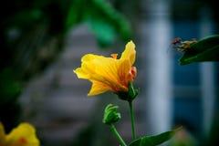 Flor do ponto, Fotos de Stock Royalty Free