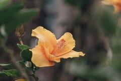 Flor do ponto, Fotos de Stock