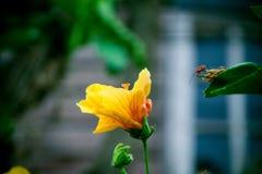 Flor do ponto, Foto de Stock