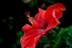Flor do ponto, Fotografia de Stock