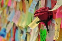 Flor do protesto Fotografia de Stock