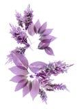 Flor do raio X Imagem de Stock Royalty Free