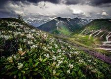 Flor do rododendro Fotografia de Stock