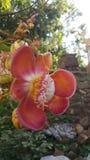 Flor do Sal Imagens de Stock