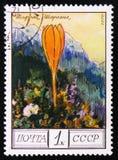 A flor do scharojanii do açafrão, do ` da série protegeu árvores e ` dos arbustos, cerca de 1976 Imagem de Stock Royalty Free