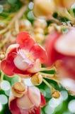 Flor do Shorea robusta ou do Sala - flora do Sal na ?rvore da bala de canh?o A ?rvore ? honrada por povos budistas imagem de stock royalty free