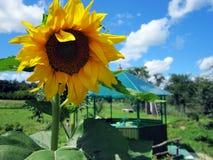 A flor do tema imagens de stock royalty free