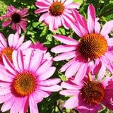A flor do tema fotos de stock royalty free