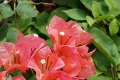 Flor do tempo de mola fotos de stock