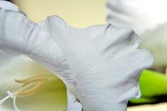 Flor do tipo de flor Fotos de Stock
