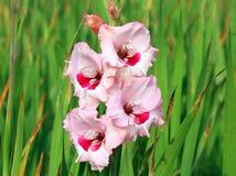 Flor do tipo de flor Fotos de Stock Royalty Free