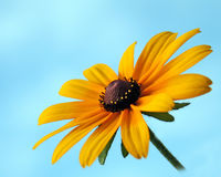 Flor do verão Imagens de Stock