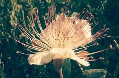 Flor do verão Imagem de Stock