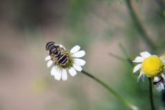Flor do verão Foto de Stock Royalty Free