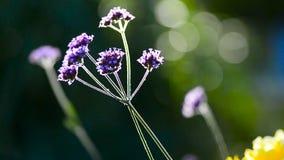 Flor do verão na luz do contorno filme