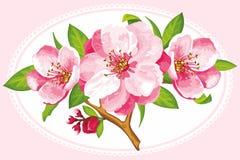 Flor do vetor da flor de Sakura Imagem de Stock Royalty Free