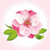 Flor do vetor da flor de Sakura Fotografia de Stock