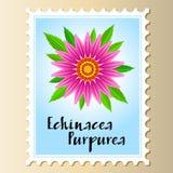 Flor do vetor do purpurea do Echinacea em um selo postal fotos de stock royalty free