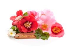 Flor do whit do tronco foto de stock