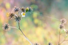 A flor do wildflower na floresta úmida Imagem de Stock Royalty Free