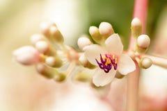 Flor doce foto de stock royalty free