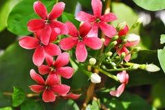 Flor doce cor-de-rosa da mão Foto de Stock Royalty Free