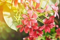 Flor doce cor-de-rosa da mão Imagens de Stock
