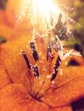 Flor doce feericamente Foto de Stock Royalty Free