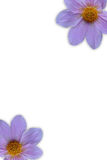 Flor dos en marco Foto de archivo