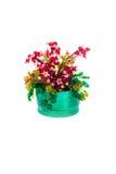 Flor dos grânulos Imagem de Stock