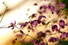 Flor dos jardins na flor completa Flores em conjuntos pequenos em um arbusto abstraia o fundo Fotos de Stock Royalty Free