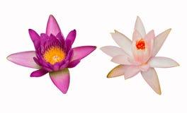 Flor dos lótus isolada no fundo branco Imagem de Stock Royalty Free
