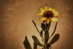 Flor dourada Fotos de Stock